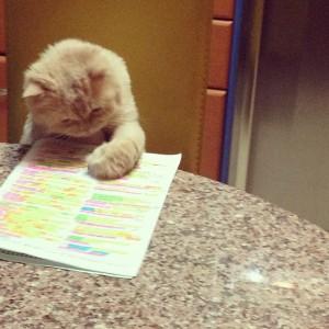 cat-studying-300x300